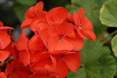 Flores8_LND0162