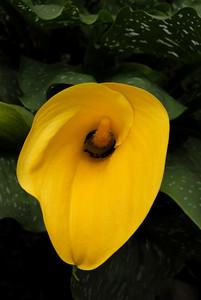 Flor11_LND0185