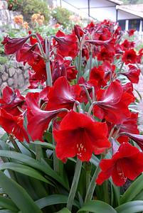 Flores10_LND0173