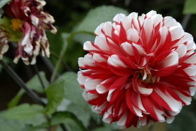 Flores5_LND0156