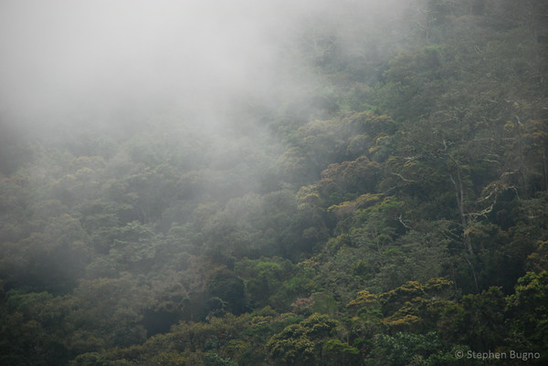 colombia coffee country cloud forest