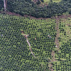 Plantation workers apply pesticides to juvenile coffee plants