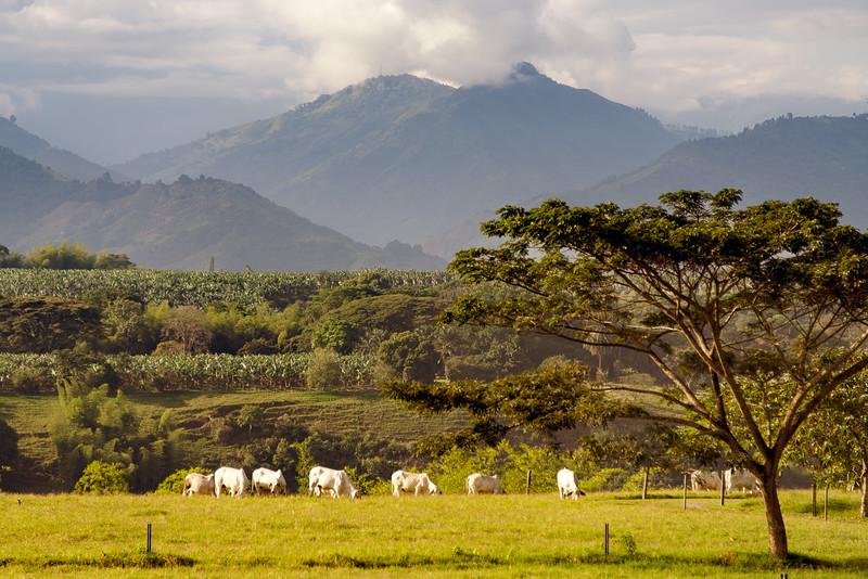 Morning at Hacienda Bambusa