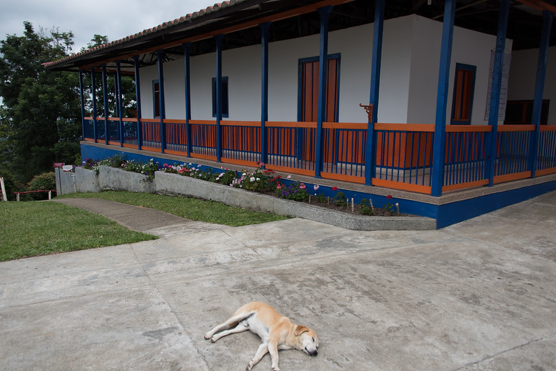 Sleeping dog at San Alberto