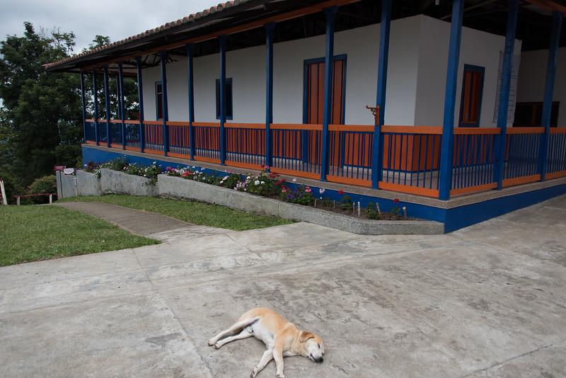 Sleeping dog at San Alberto