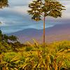 Twilight near Hacienda Bambusa