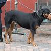 Bomb sniffing dog in Bogotá