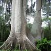massive trunk