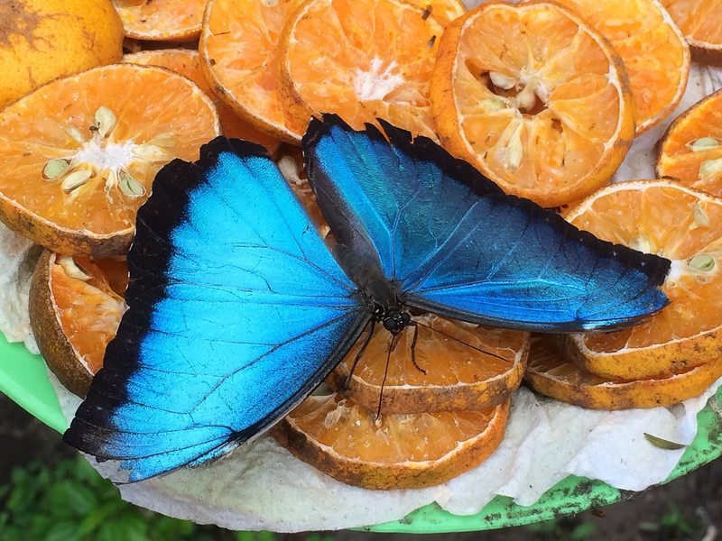 Butterfly farm at the Botanical Gardens