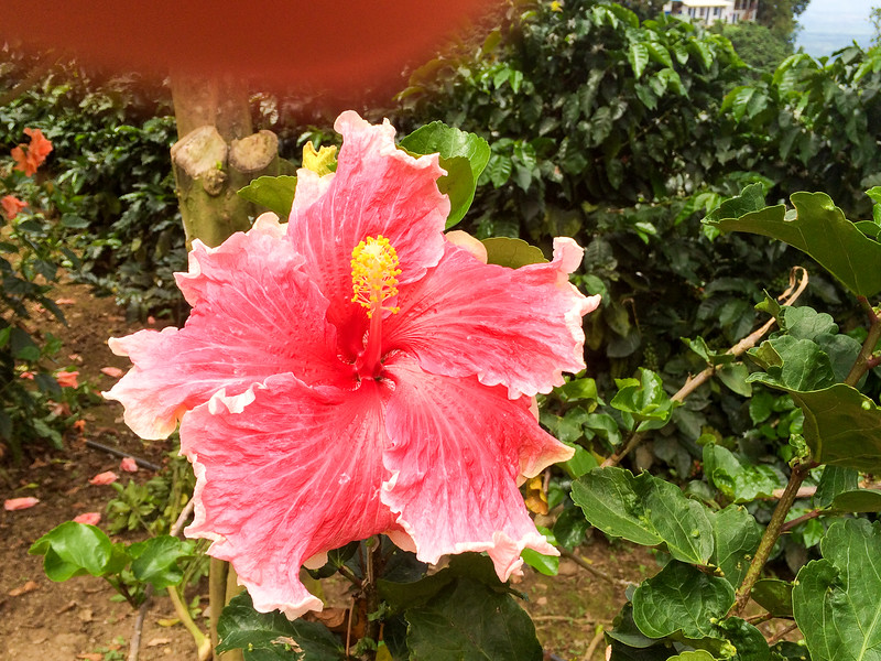 Flower, San Alberto