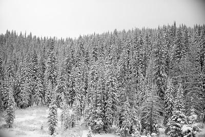 Colorado IMG_7960