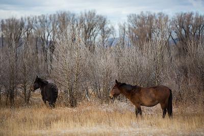Colorado IMG_7940