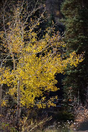 Colorado IMG_7811