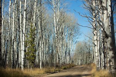 Colorado IMG_7809