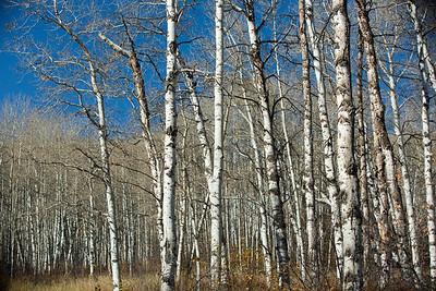 Colorado IMG_7806