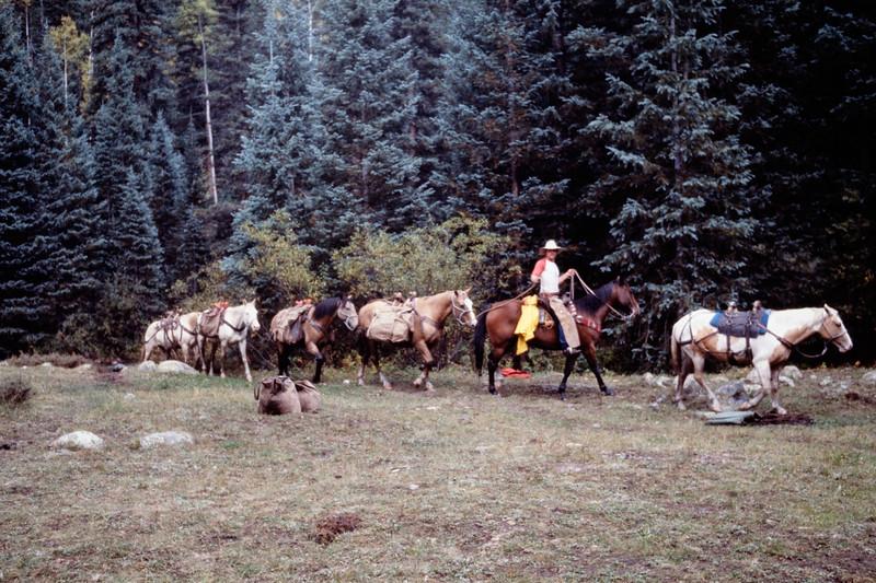 pack_horses-t10166