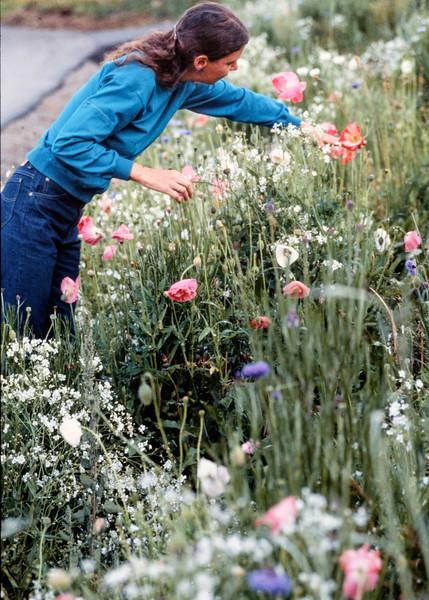 rita+flowers-t10180