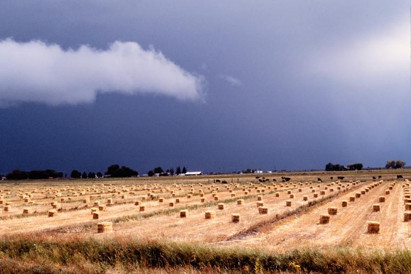 hay_field-weminuchee-01-t10110
