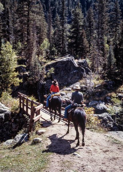 horses+trail-t10174