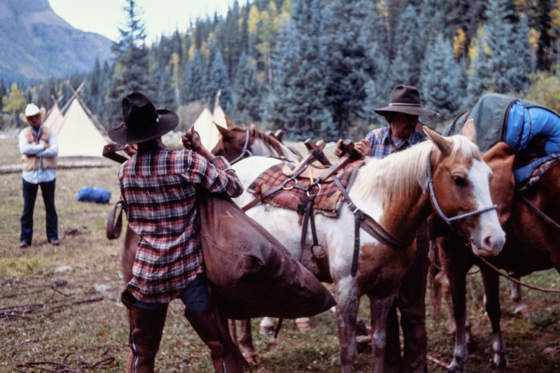 pack_horses-t10167