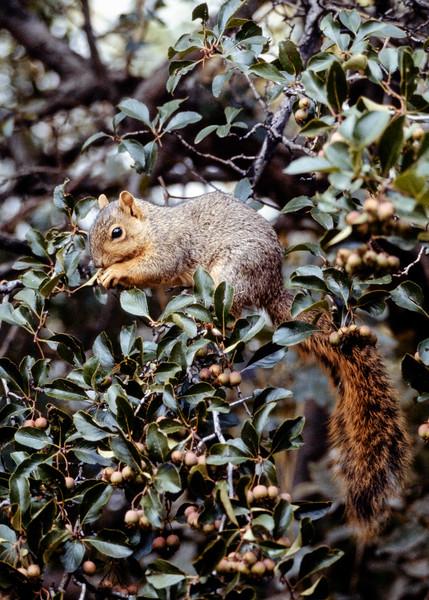 squirrel-t0070
