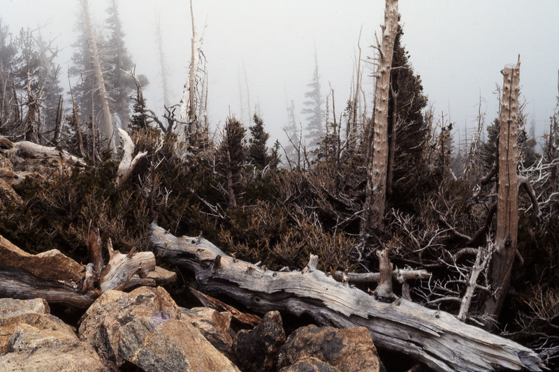 forest_in_fog-t0058