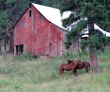 Colorado Barn and Horses (Just of of Turkey Creek Hwy) Near Evergreen CO.