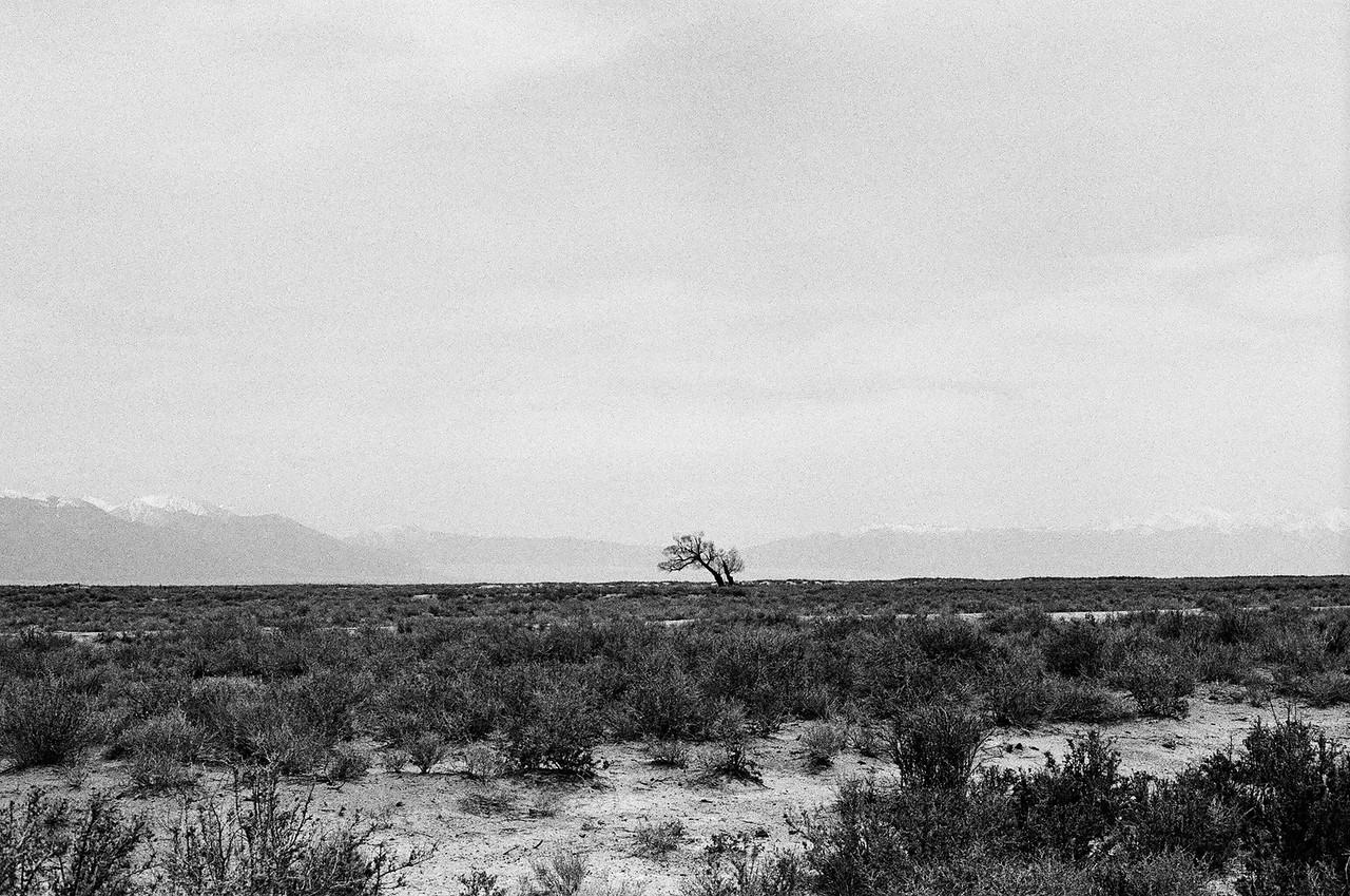 Desert, southern Colorado