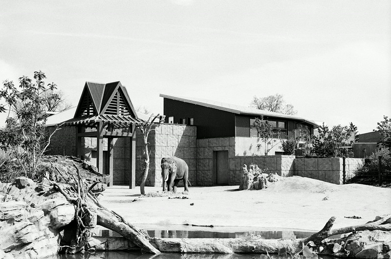 Elephant, Denver Zoo