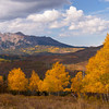 Aspens and mountains Colorado