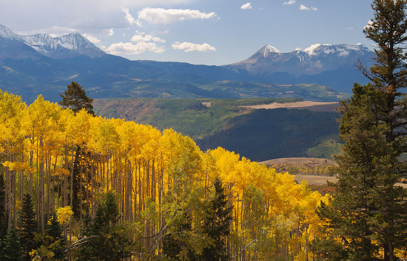Aspens and mountains at 10,000 ft. Colorado