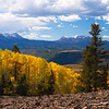 Aspens at 10,000 ft Colorado