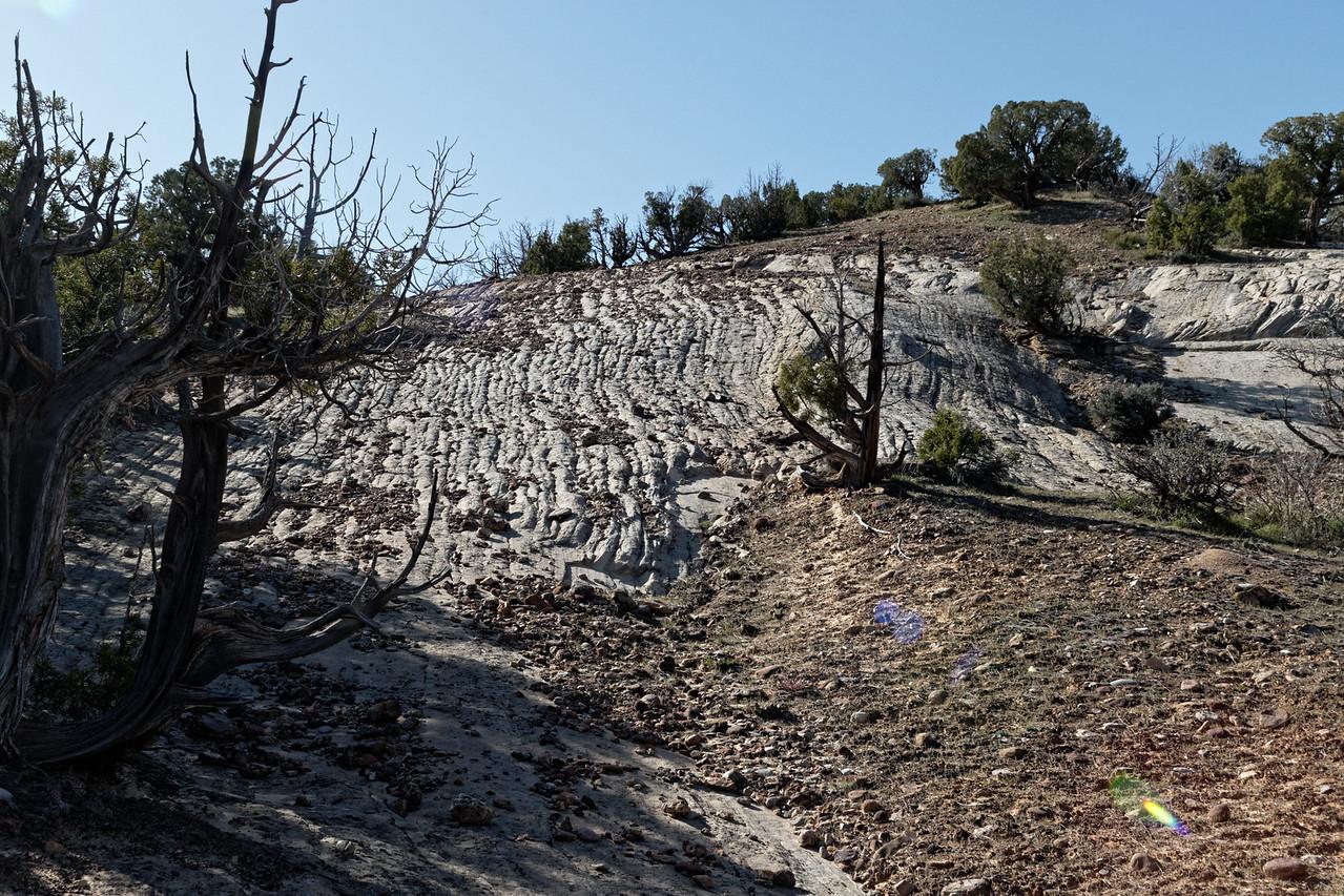 Dinosaur Tracks (Red Fleet State Park UT)