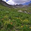 July wildflowers in American Basin off the Alpine Loop Road, CO.<br /> July 21, 2013
