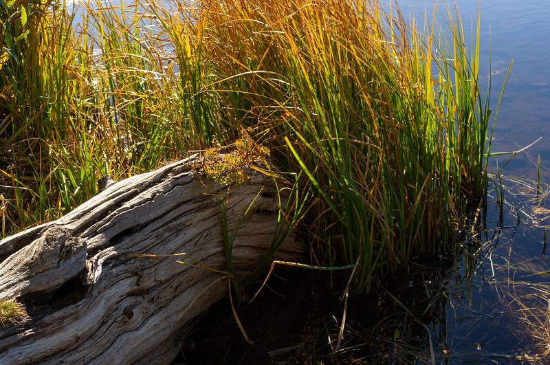 Shore detail, small Lake, Brainard Lake Recreation area, Colorado.