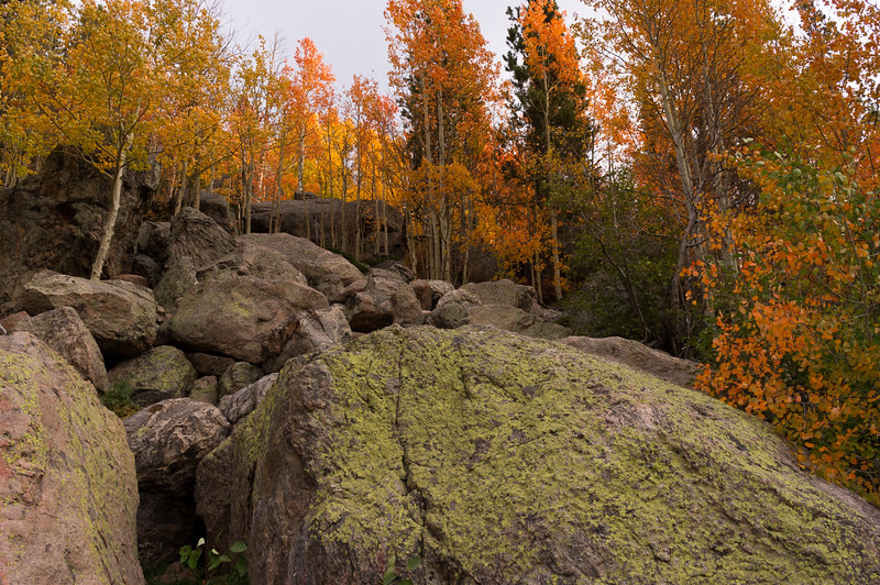 Green lichens on rock, and fall aspens; Bear Lake, Rocky Mountain National Park, Colorado.