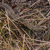 Snake; Rocky Mountain National Park, Colorado.