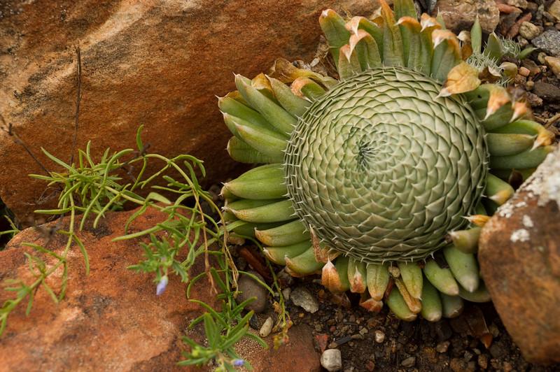 Plant detail, Yampa River Botanic Park, Steamboat Springs, Colorado