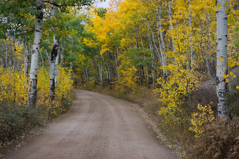 Gravel road through aspen grove near the Moraine Campground, Rocky Mountain National Park, Colorado.