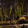 Grasses growing near the shore of Lake Irene, Trail Ridge Road, Rocky Mountain National Park, Colorado.