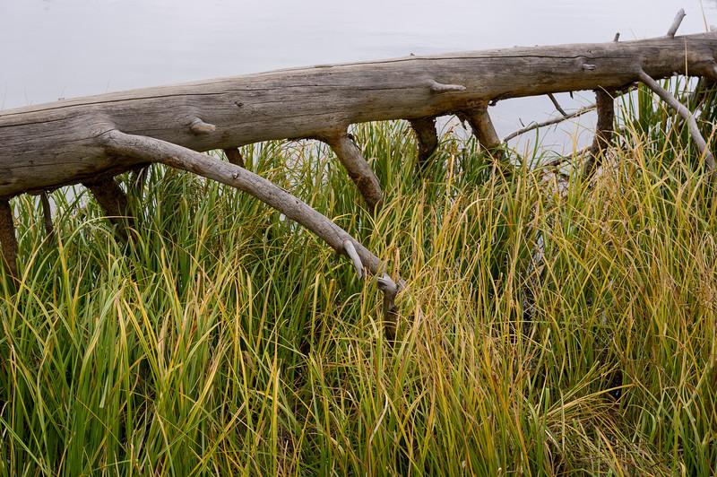 Sprague Lake, shore detail - log and grass; Rocky Mountain National Park, Colorado