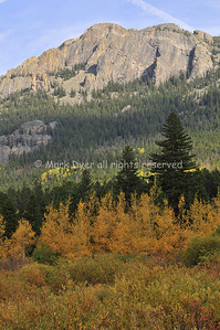 Autumn colours near Estes Park, CO