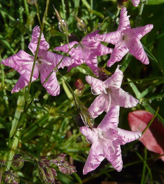 Colorado flower.