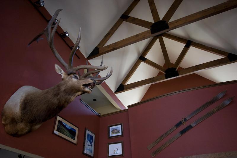 """Prize winning rack aka """"Elk antlers"""""""