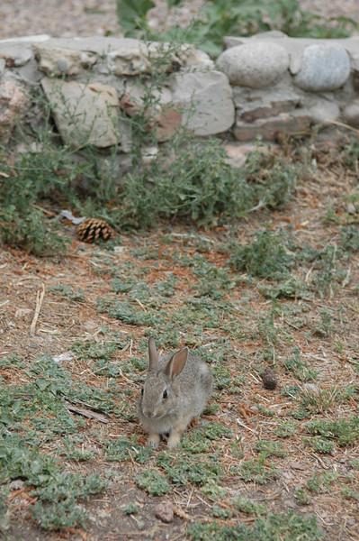 Bunny at Dinosaur Ridge