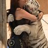 Big Bengal Tiger Hug