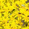 Bugs on flowers