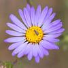 LIttle bug on a pretty flower