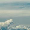 Little bird in the sky
