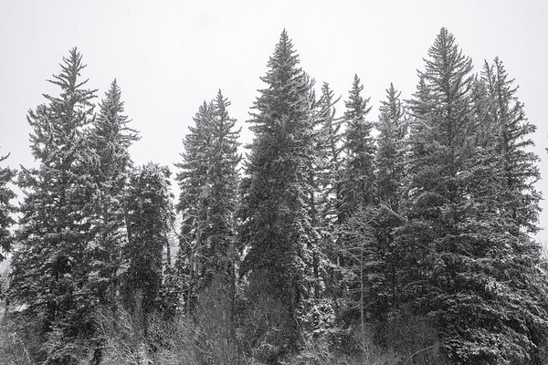 Trees On The Eagle River